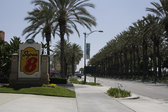 Super 8 Anaheim Near Disneyland: Road with palms.
