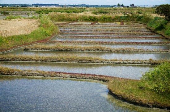 Batz-sur-Mer, Fransa: Marais Salants