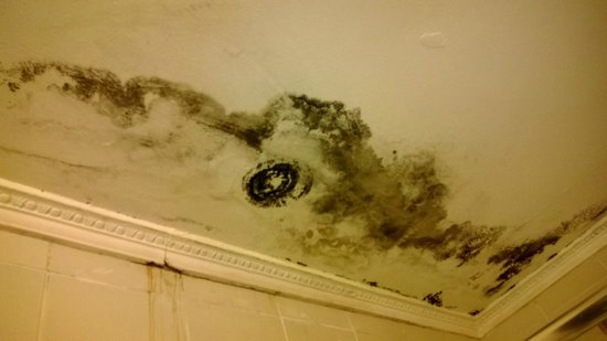 Belkon Club Hotel: mould in our room