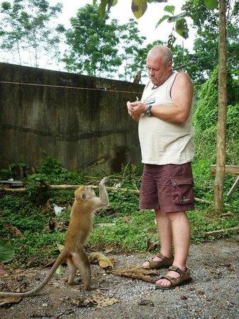 Chopsticks Hill (Khao Takiab): even een aap een bekeuring uit schrijven/met die apenstreken