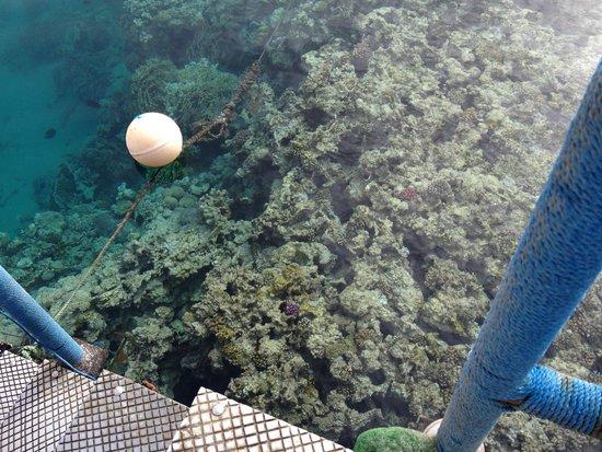 """Stella Di Mare Beach Resort & Spa Makadi Bay: Un """"angolo"""" di barriera vista dalla scaletta"""