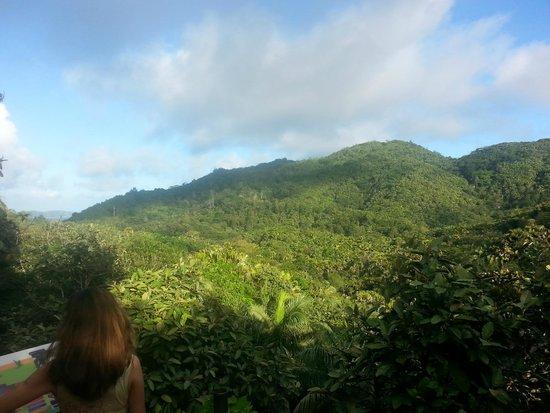 Vallee de Mai Nature Reserve : Al di sopra