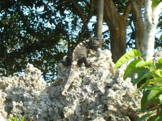 Henry Morgan Resort: Fauna locale.