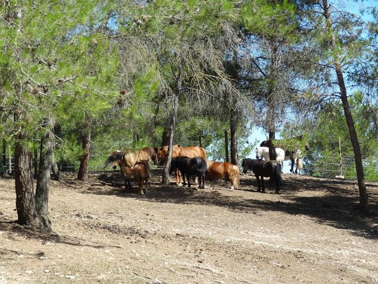 Village Club Pont Royal en Provence : Les animaux du Centre Equestre