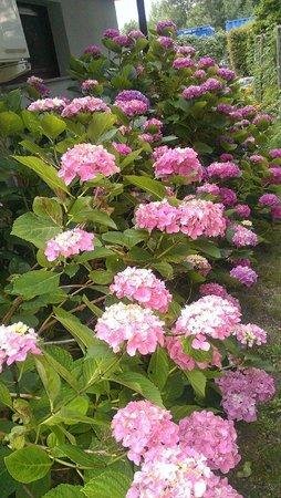B&B Casa Angela: garden
