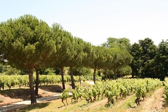 La Table de la Bergerie : les vignes