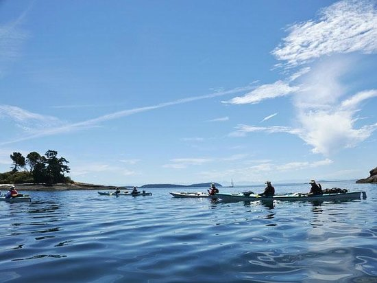 kayak group - Picture of Sea Quest Expeditions, Friday