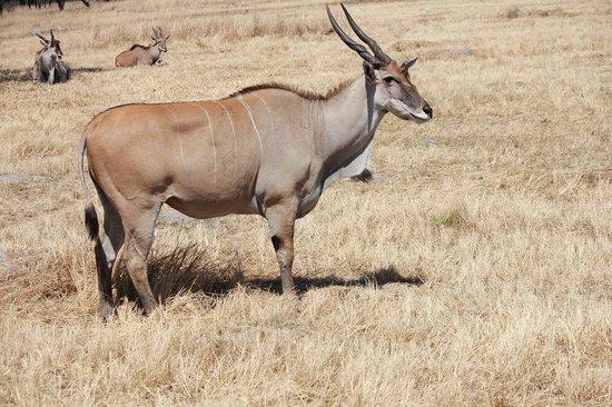 Mukuvisi Woodlands: 動物の種類は多くないが見ることができる