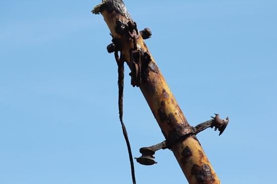 Plassey Wreck: Plassey Mast
