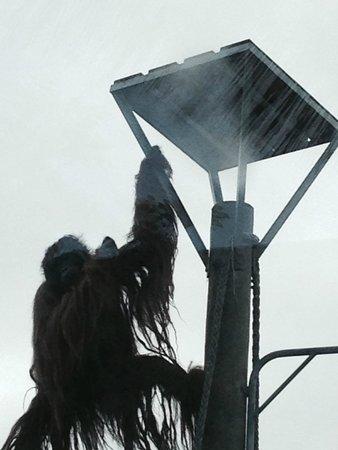 Auckland Zoo: hairy orangutan