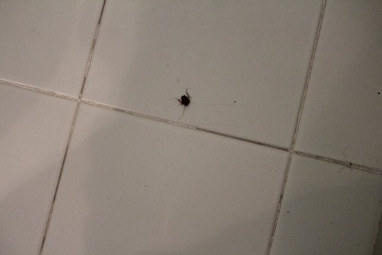 Hotel Concorde Fiera: Roaches in bathroom, grout and tiles dirty