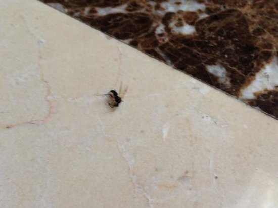 Al Areen Palace & Spa: bugs bugs and bugs