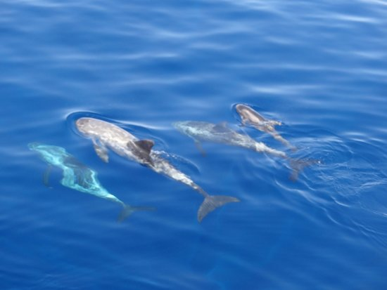 Iberotel Palace : vip cruise dolphins