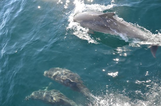 Whales in Paradise - Gold Coast Whale Watching Pty Ltd: Dolphin family