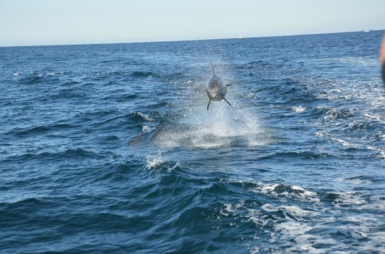 Whales in Paradise - Gold Coast Whale Watching Pty Ltd: Out of the blue