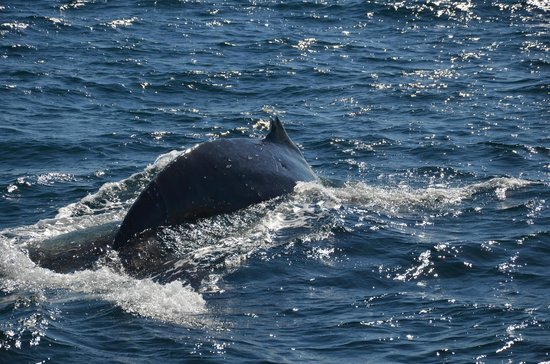 Whales in Paradise - Gold Coast Whale Watching Pty Ltd: A close encounter