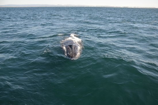 Whales in Paradise - Gold Coast Whale Watching Pty Ltd: Being mugged at..
