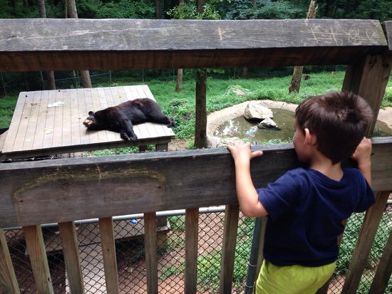 Bear Hollow Zoo: Watching the bear sleep