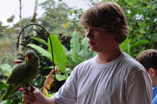 Leaves and Lizards Arenal Volcano Cabin Retreat: ur oldest with Larita