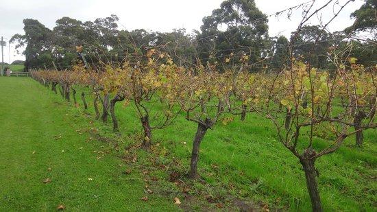 Cullen Wines - Cullen Restaurant: The Vines
