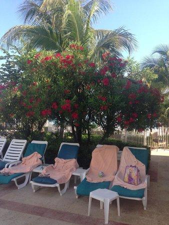 Hotel Riu Caribe: Цветочки