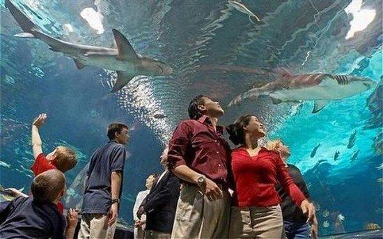 Holiday Inn Express Fairfield: Newport Aquarium