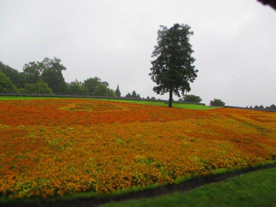 Tottori Hanakairo Flower Park: お天気だと後ろに大山が・・・
