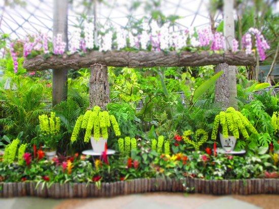 Tottori Hanakairo Flower Park: ドームの中