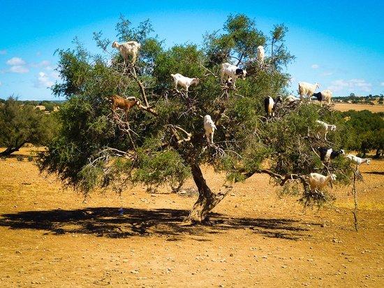 Passport Travel - Private Day Tours: Camino a Essaouira
