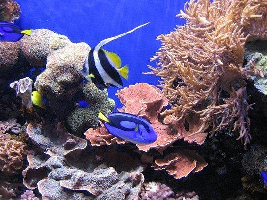 Holiday Inn Express Hotel & Suites Watsonville: Monterey Bay Aquarium