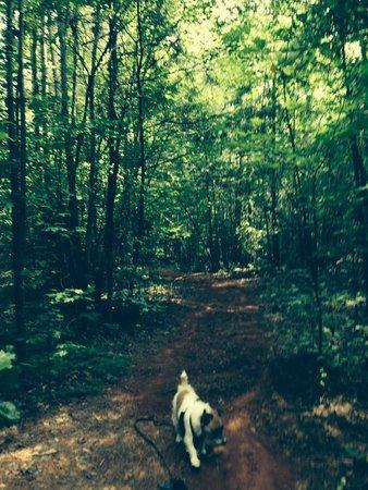 Spartanburg NE/Gaffney KOA: trail from campground