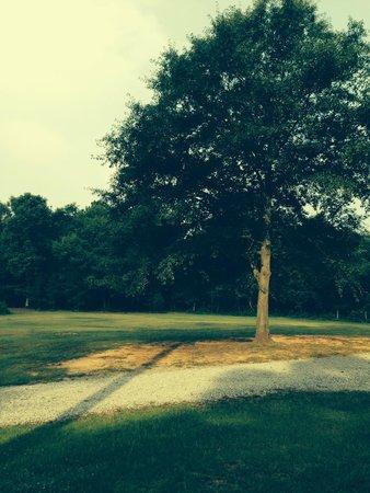 Spartanburg NE/Gaffney KOA: from campsite