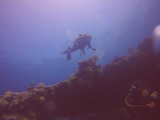 Always Diving & Water Sports : Over the reef