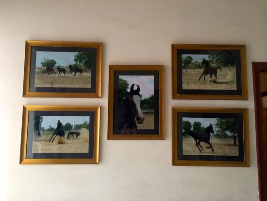 Hotel Harasar Haveli: Horses on the walls