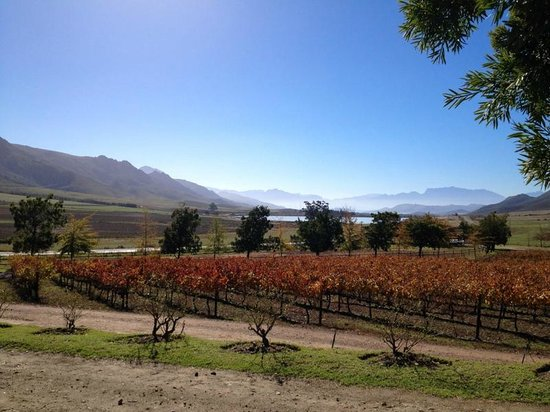 Cycle the Cape - Day Tour: wine region