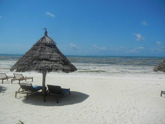 Villa de Coco : Beach