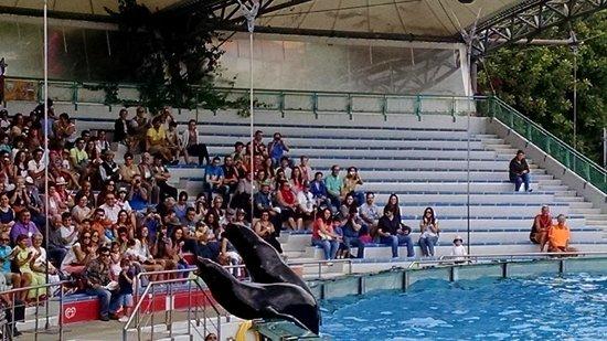 Lisbon Zoo (Jardim Zoologico de Lisboa): arquibancadas