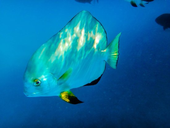Passions of Paradise Reef Tour : fish