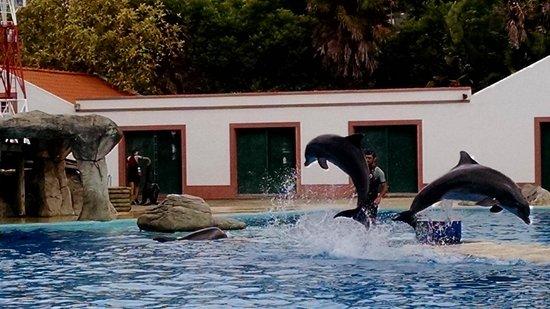 Lisbon Zoo (Jardim Zoologico de Lisboa): show de golfinhos