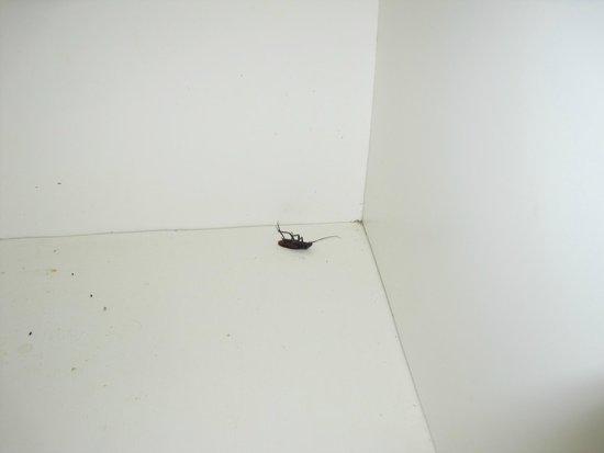 Ocean Creek Resort : Bug found
