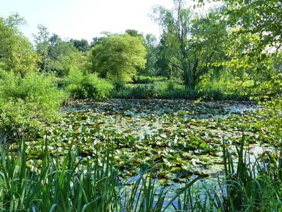 Kenilworth Park and Aquatic Gardens: One of several Lily Ponds