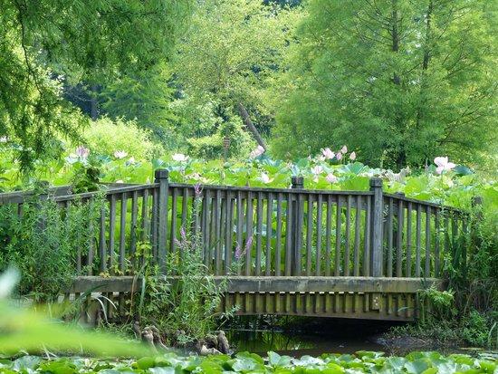 Kenilworth Park and Aquatic Gardens: Monet-esque