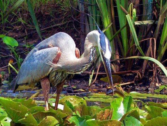 Kenilworth Park and Aquatic Gardens: Dinner
