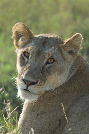 Hostel Hoff: Safari