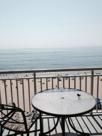 Holiday Inn Hotel & Suites Ocean City: Even the birds hang out for the views :)