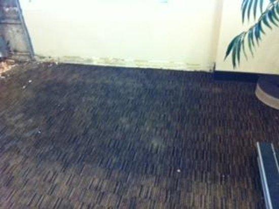 La Quinta Inn & Suites Denver Airport DIA: water damage on carpet in exercise room