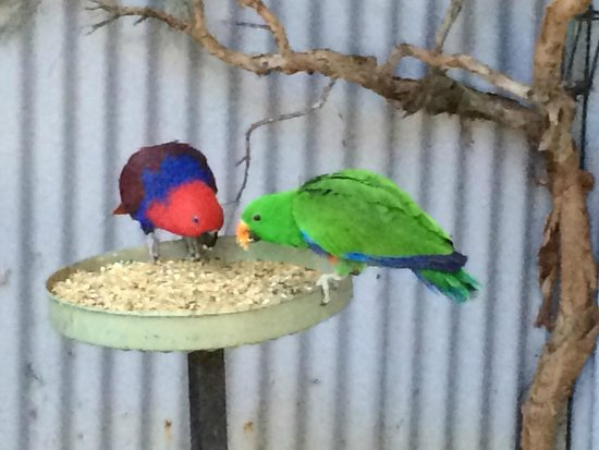 Featherdale Wildlife Park: more birds