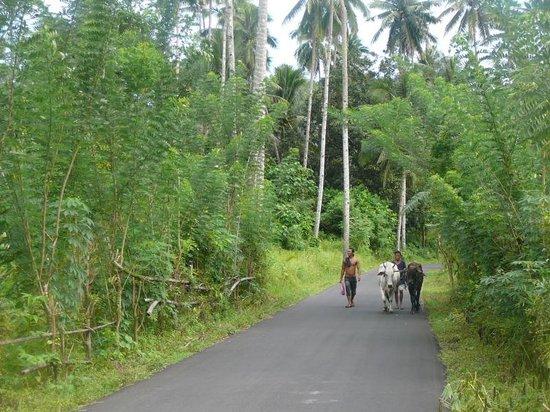 Tangkoko Dove Villas: Walking to Tangkoko