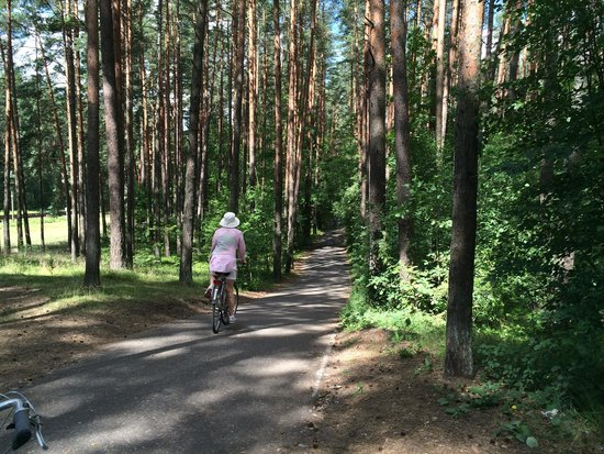 E.A.T. Riga Tours: Just some of the beautiful woods you ride through on the way to Jurmala.