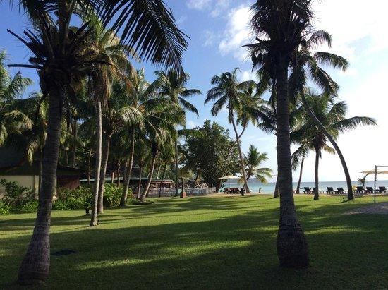 Paradise Sun: il giardino